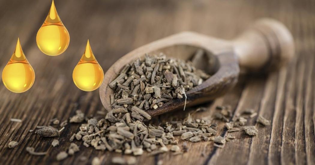 valerian root oil for heartburn
