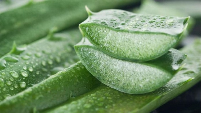 aloe vera for get rid of chest acne