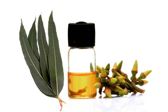 eucalyptus oil for ringworm