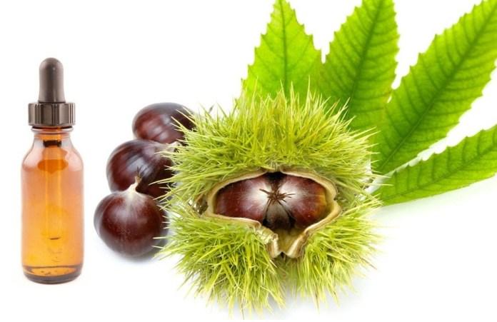 horse chestnut oil to varicose veins
