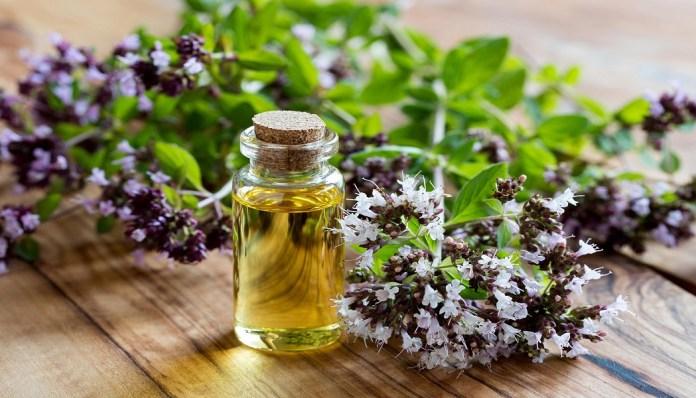 oregano essential oil for burns