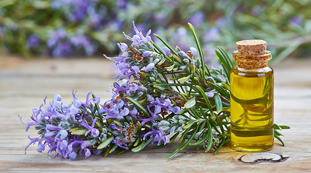 rosemary oil for autism