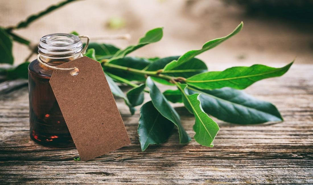 tea tree essential oil for contact dermatitis