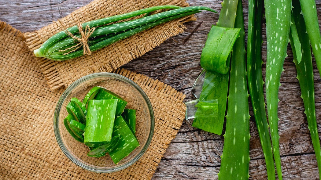 aloe vera for fungal infection