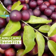 camu camu benefits