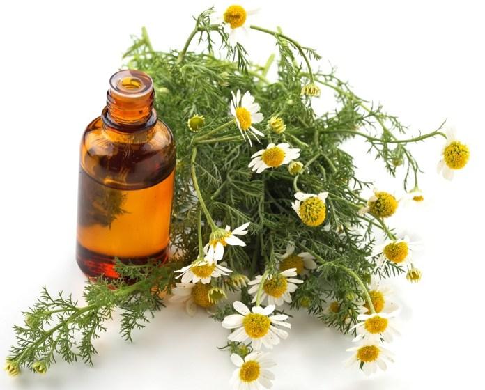 chamomile essential oil for sinus