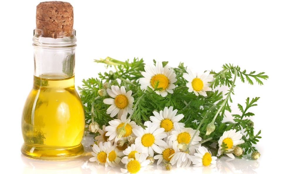 chamomile essential oil with bottle