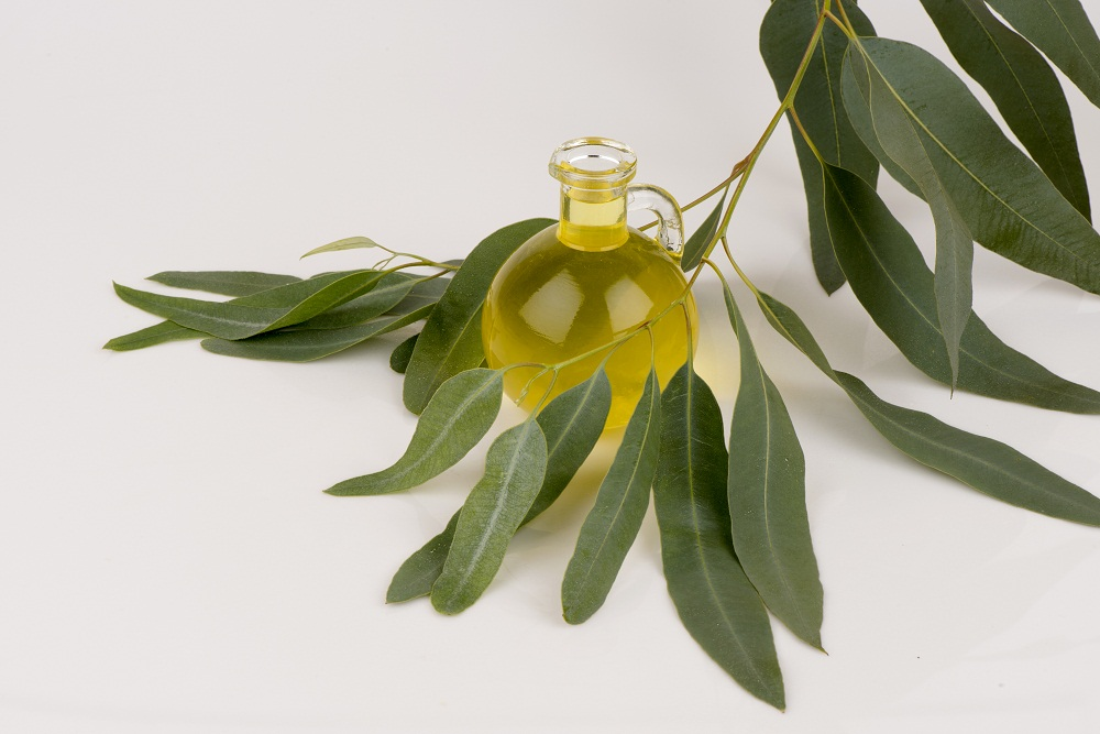 eucalyptus essential oil for immune system