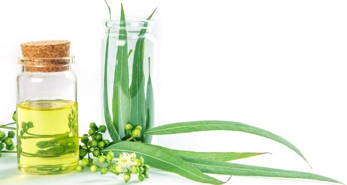 eucalyptus essential oil for sinus