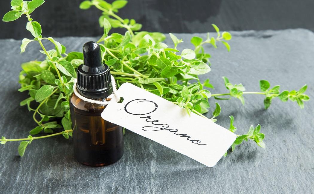oregano essential oil for detox