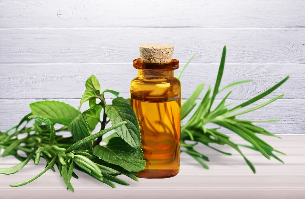 tea tree essential oil for post nasal drip