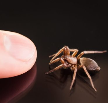 how to treat a spider bite