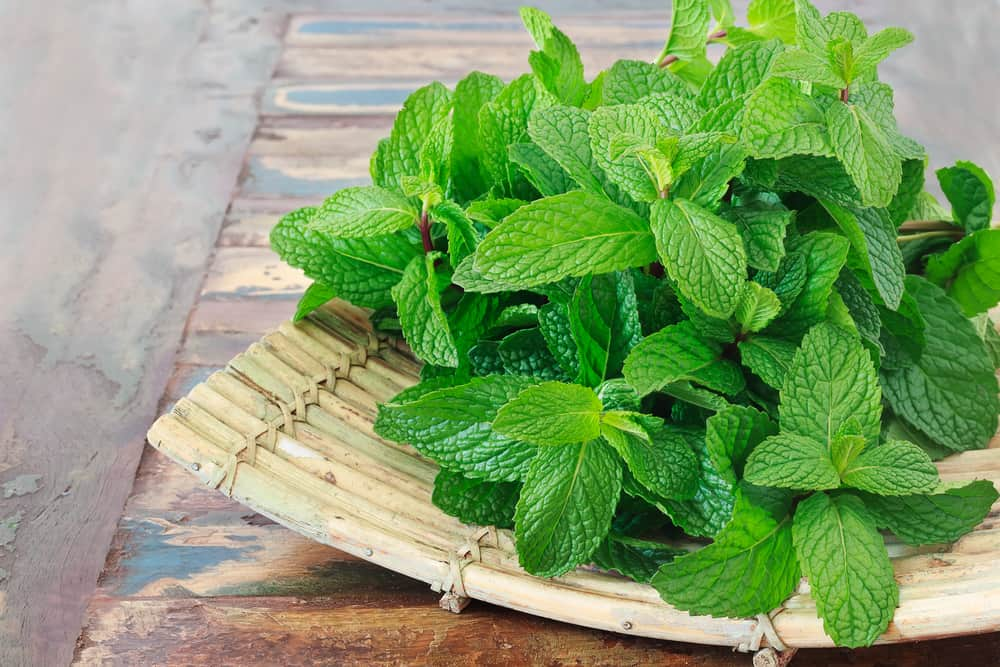 Mint Leaves Benefits
