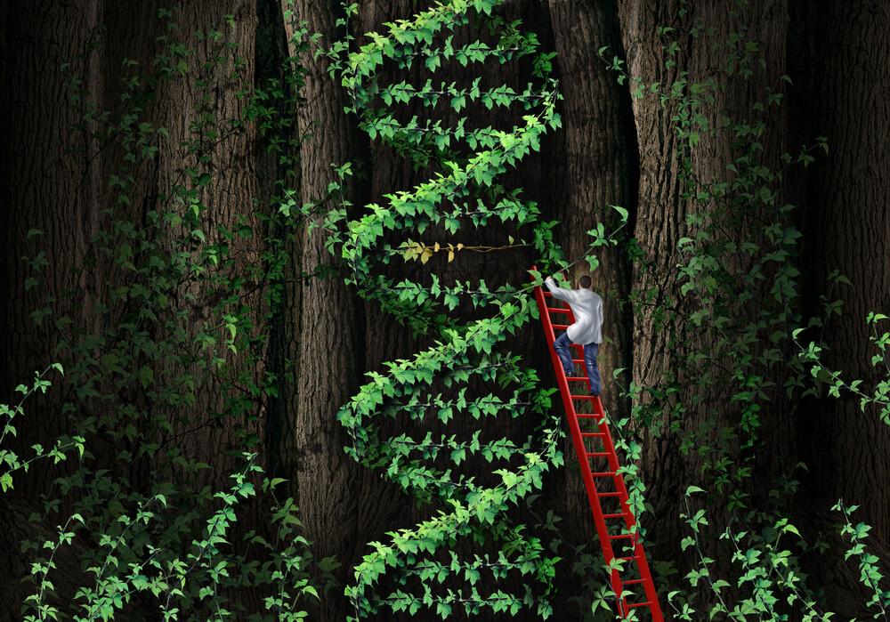 Repairs DNA