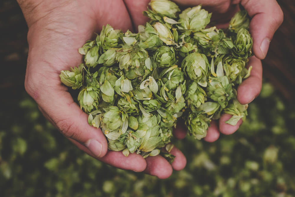 hops for general health
