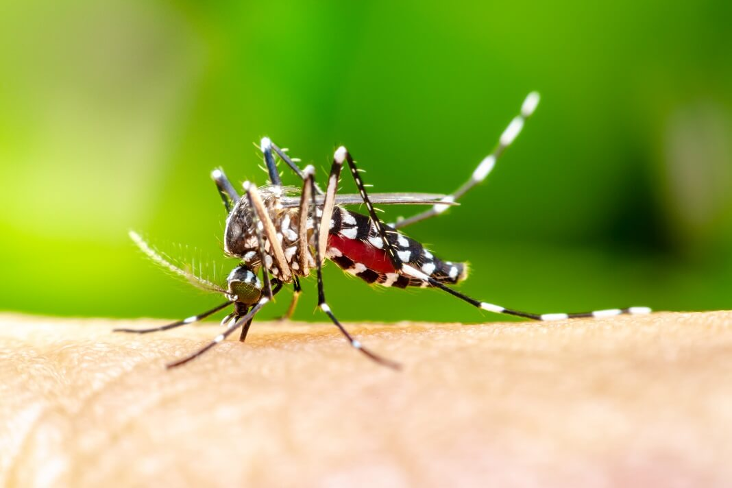 why do mosquitoes bite certain people