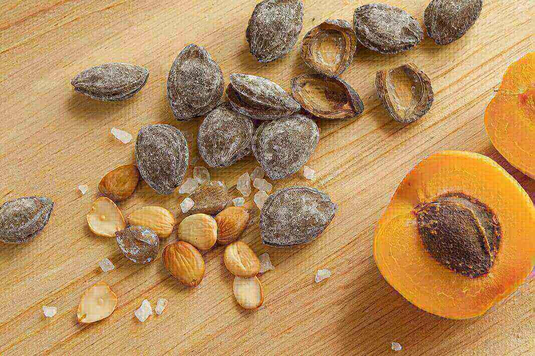 apricot seeds benefits