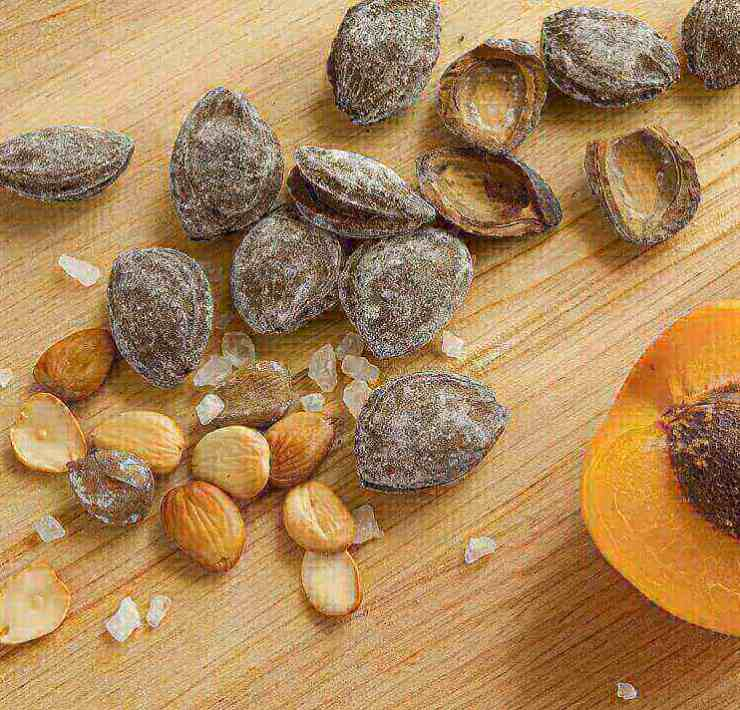 apricot seeds benefits