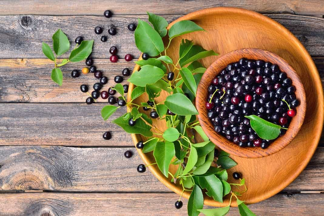 Best Uses And Health Benefits Of Maqui Berry How To Cure