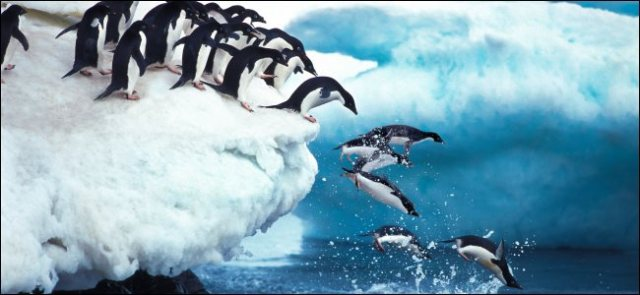Penguins jumping in the ocean