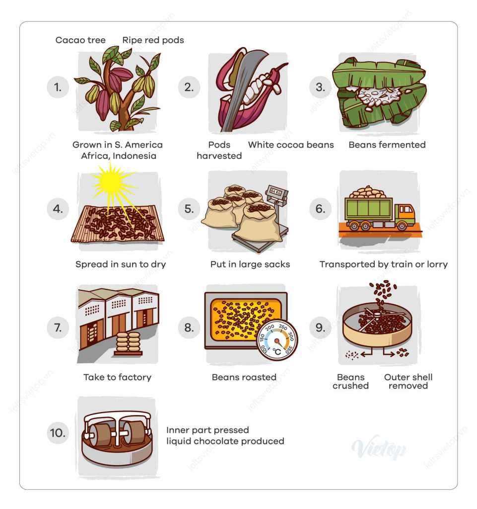 IELTS Essay: Cocoa Beans and Chocolate Process Diagram