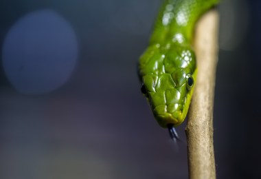 Snake ransomware isolates systems