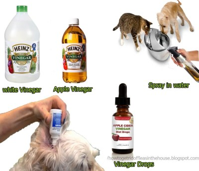 15 How Does Vinegar Kill Fleas Does Vinegar Work To Get