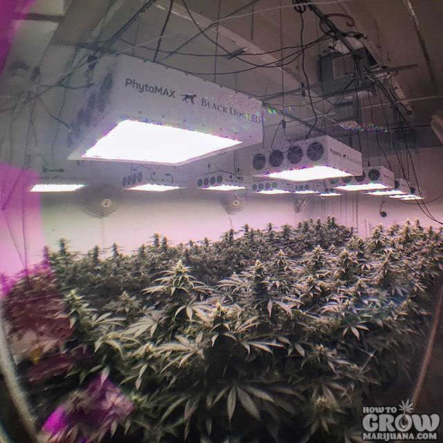 What Hydroponic Grow Box