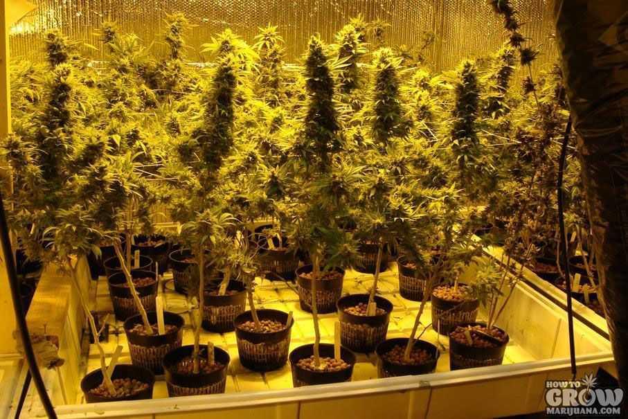 Diy Stealth Hydroponic Grow Box