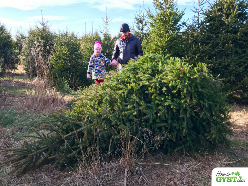 December 2017 wrap-up post for HowToGYST.com – cutting down Christmas tree with Scout and Sam, Corsi Tree Farm