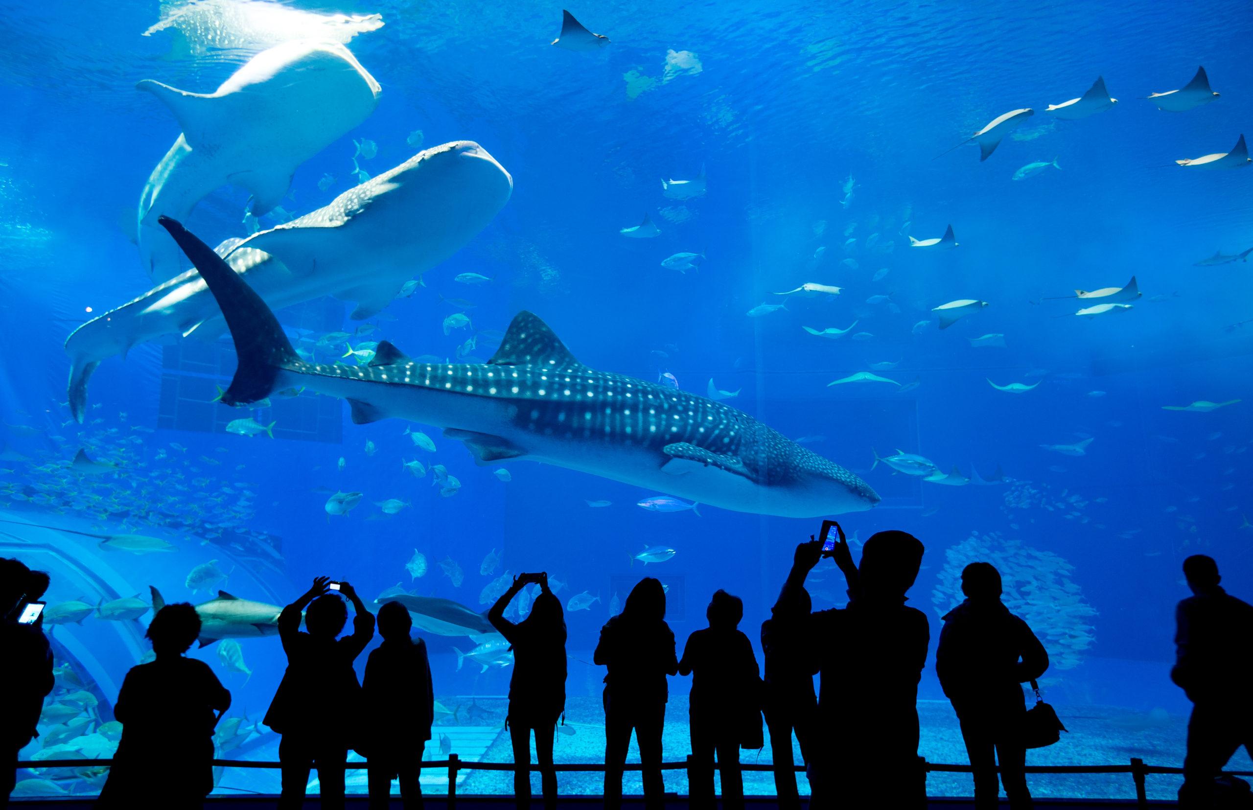 People Observing Fish At The Aquarium