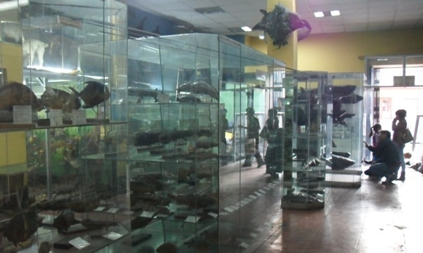 Trujillo Zoological Museum