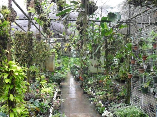 Plants in Agro Oriente, Moyobamba