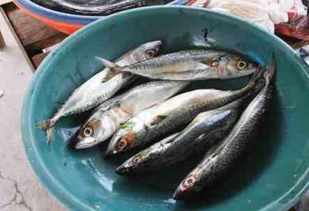 fishing in cabo blanco