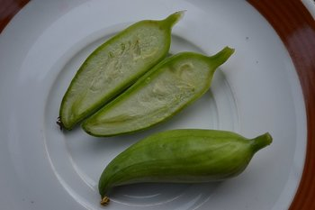 peruvian fruits and vegetables - caigua vegetable
