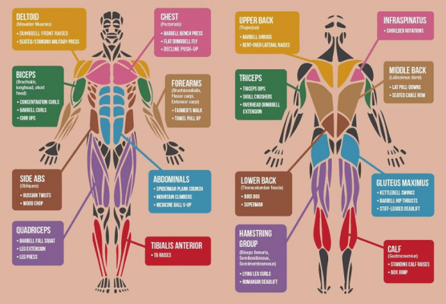 Stretching Exercises-Muscles to Stretch