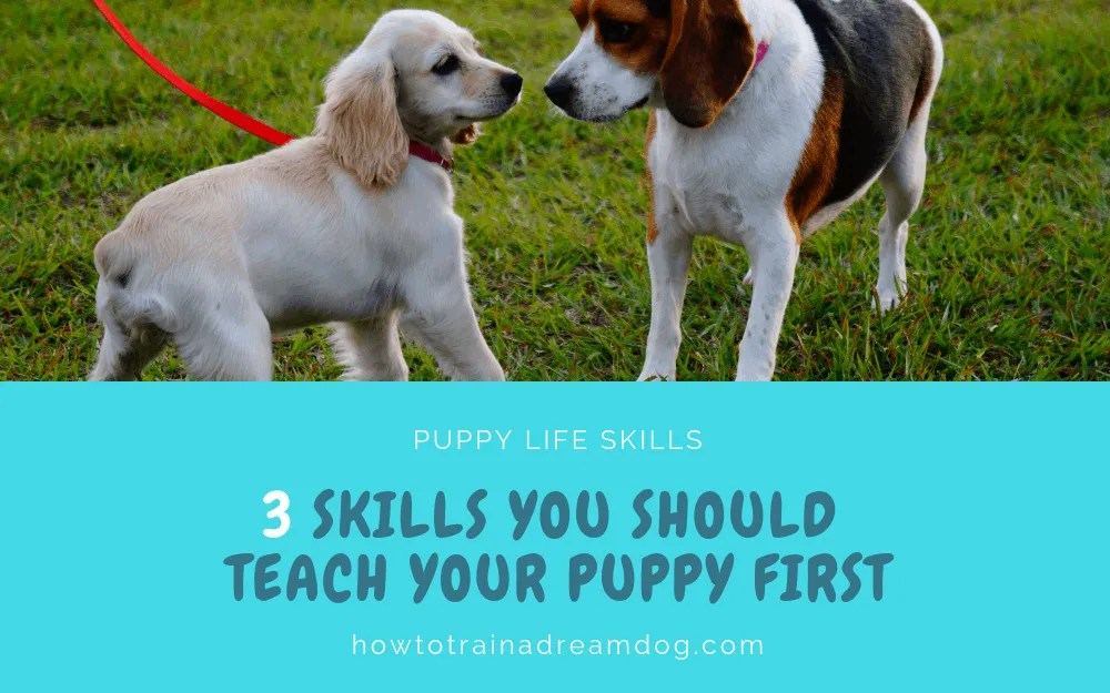 3 Skills You Should Teach Your Puppy First