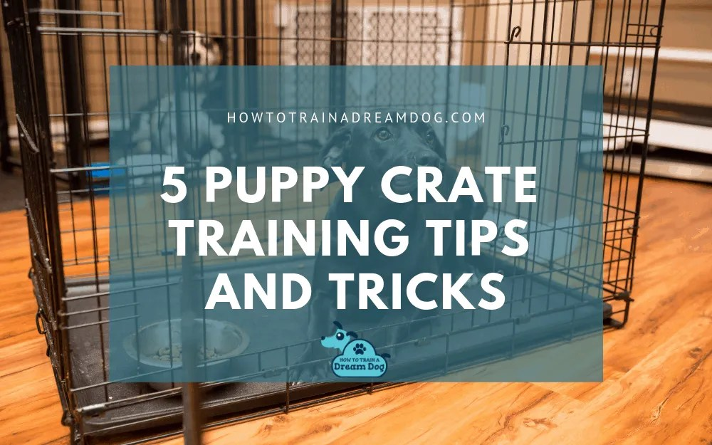 5 Puppy Crate Training Tips & Tricks