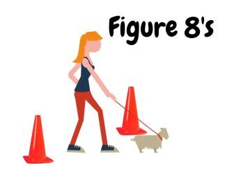 Puppy walking figure 8's.