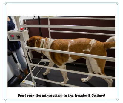 Dog training on a treadmill