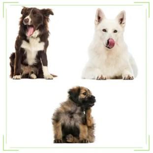 Dog licking, Dog Yawning, and Dog Scratching