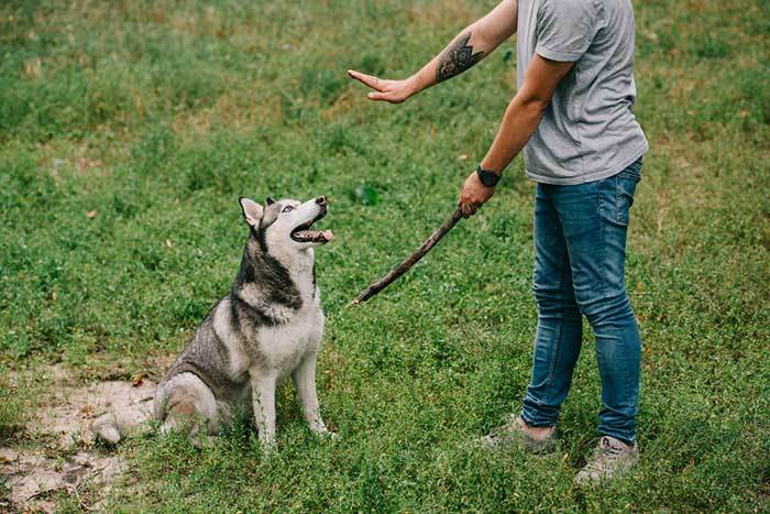 dog training mistakes most owners guide