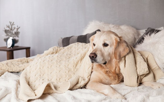 what does it mean when your dog sleeps on your clothes?