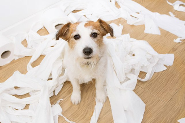 Can a dog die from eating paper towels?