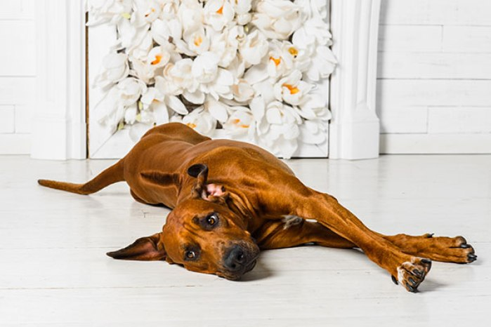 Why Does Your Dog Stretch So Much?