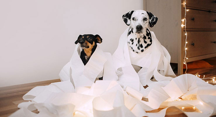 Two dogs made a mess of paper towels