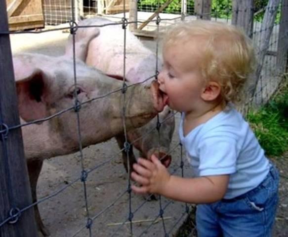 how-people-get-swine-flu