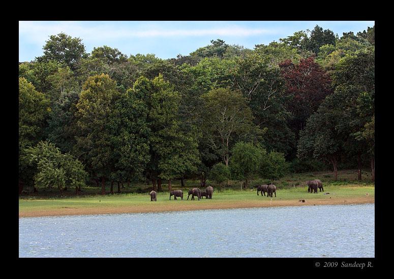 Kabini-Landscape-elephants