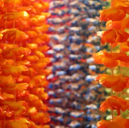 the lei maze at the museum of aloha