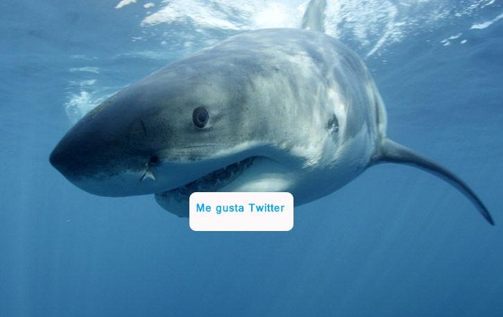 tiburones-en-twitter-(1)